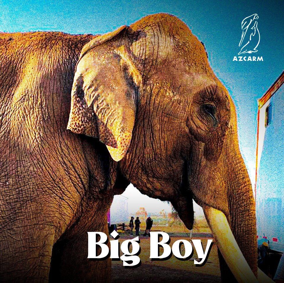 big boy azcarm iniciativa partido verde
