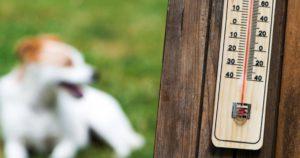 Cómo-evitar-golpe-de-calor-mascotas-Consejos-practicos-1
