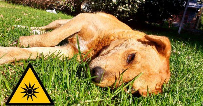 Cómo-evitar-golpe-de-calor-mascotas-Consejos-practicos-3