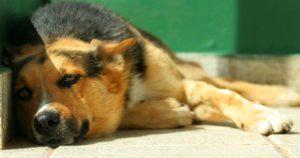 Cómo-evitar-golpe-de-calor-mascotas-Consejos-practicos-4