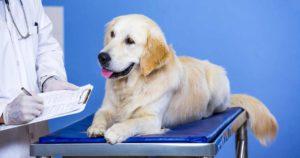 Cómo-evitar-golpe-de-calor-mascotas-Revisión-veteriario