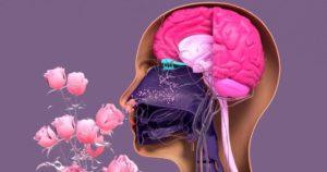 Qué-es-la-Parosmia-trastorno-olfato-asociado-Covid-5