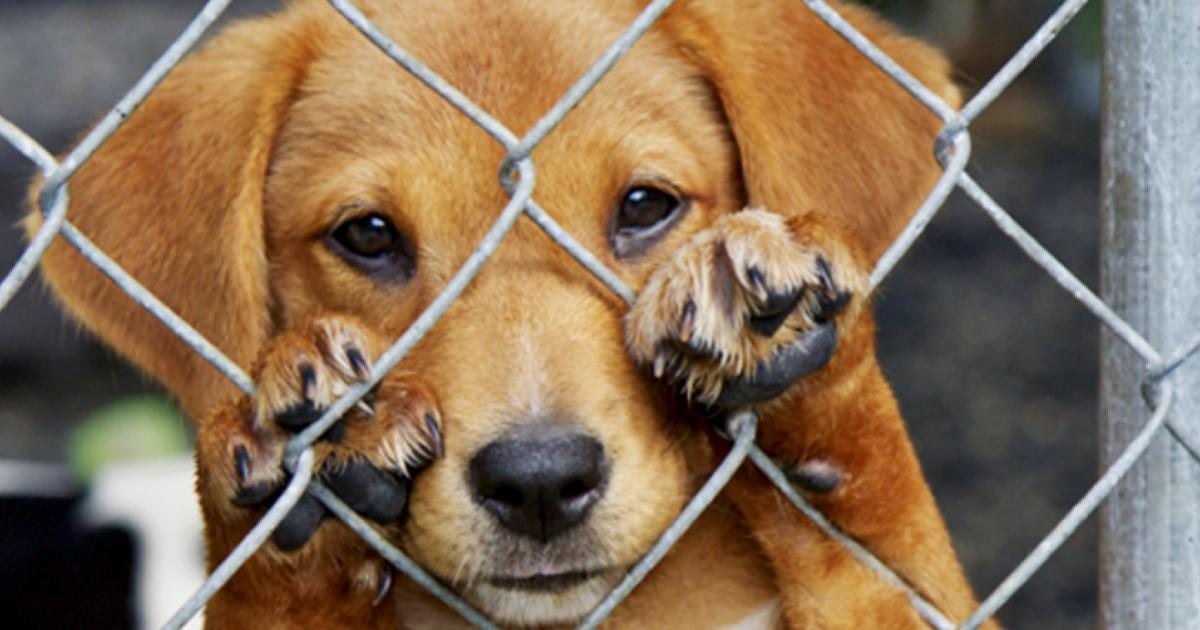 Denuncia-delito-Maltrato-animal-Estado-de-México