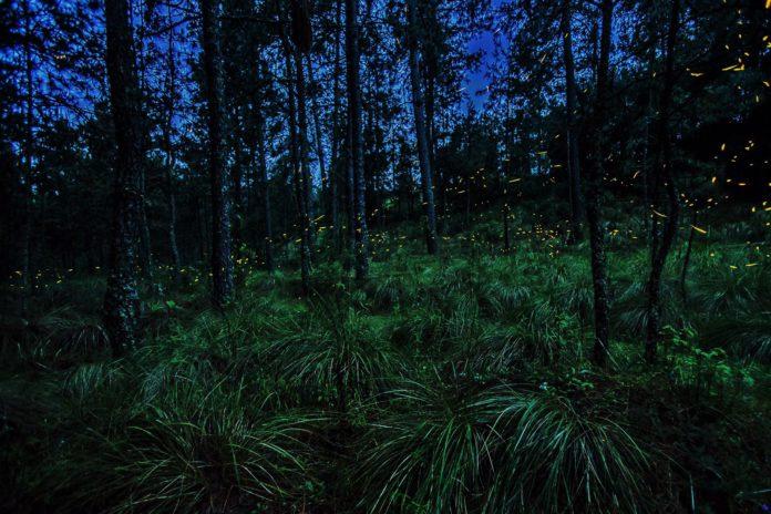 El Bosque de las Luciérnagas está en Edomex