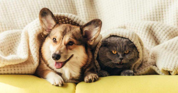 Cómo-quitar-pelos-de-gato-y-de-perro-de-la-ropa-1