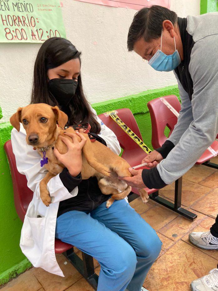 Esta semana puedes vacunar a tus perros y gatos   Foto: Salud.cdmx