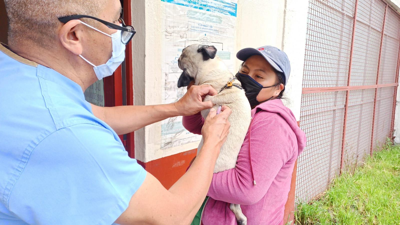 Esta semana será la jornada de vacunación para perros y gatos   Foto: Salud CDMX