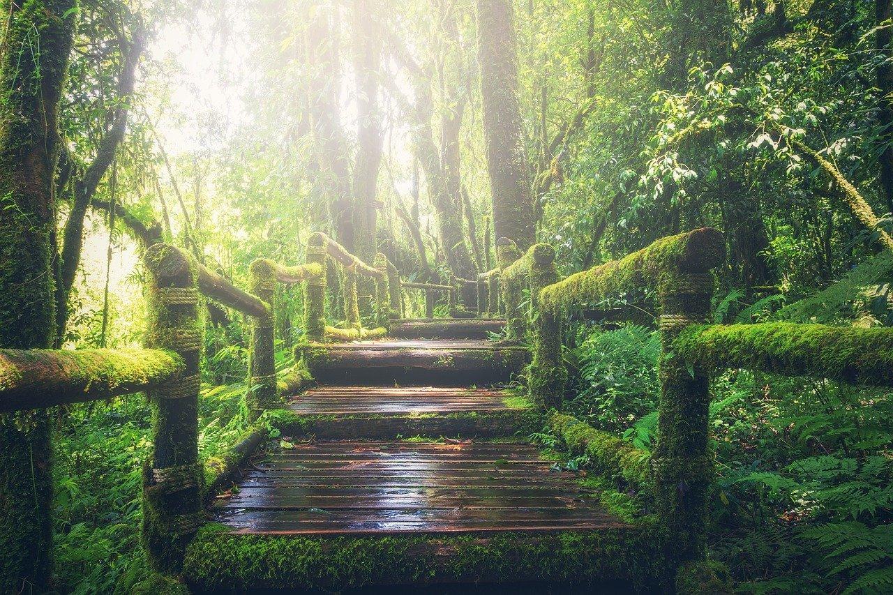La naturaleza es un seguro de vida para los 7800 millones de personas que habitan la Tierra | Foto: Pixabay