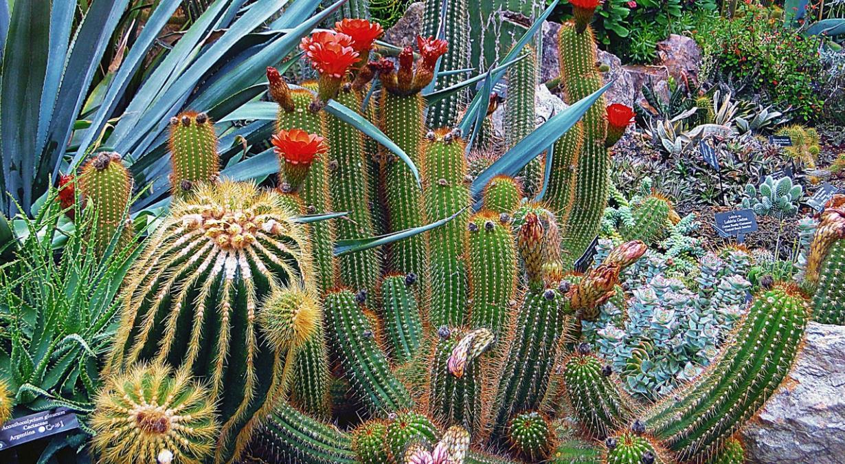 razones-para-no-comprar-cactaceas-ni-otras-plantas-prohibidas-2