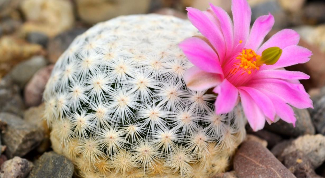 razones-para-no-comprar-cactaceas-ni-otras-plantas-prohibidas-3